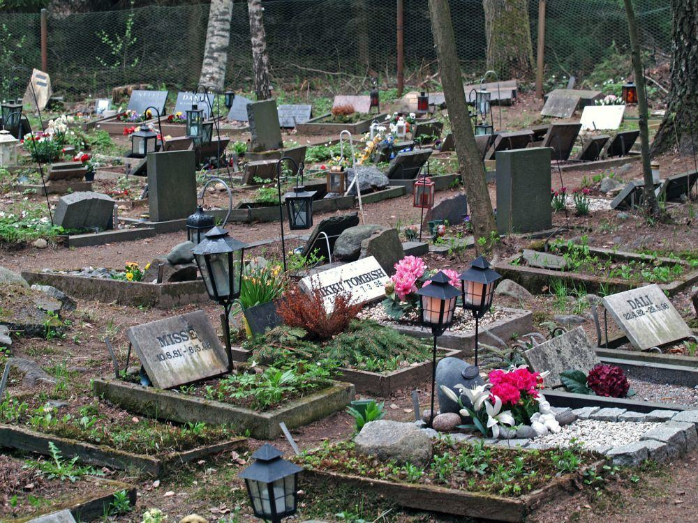 Berner Sennenhund Tierfriedhof