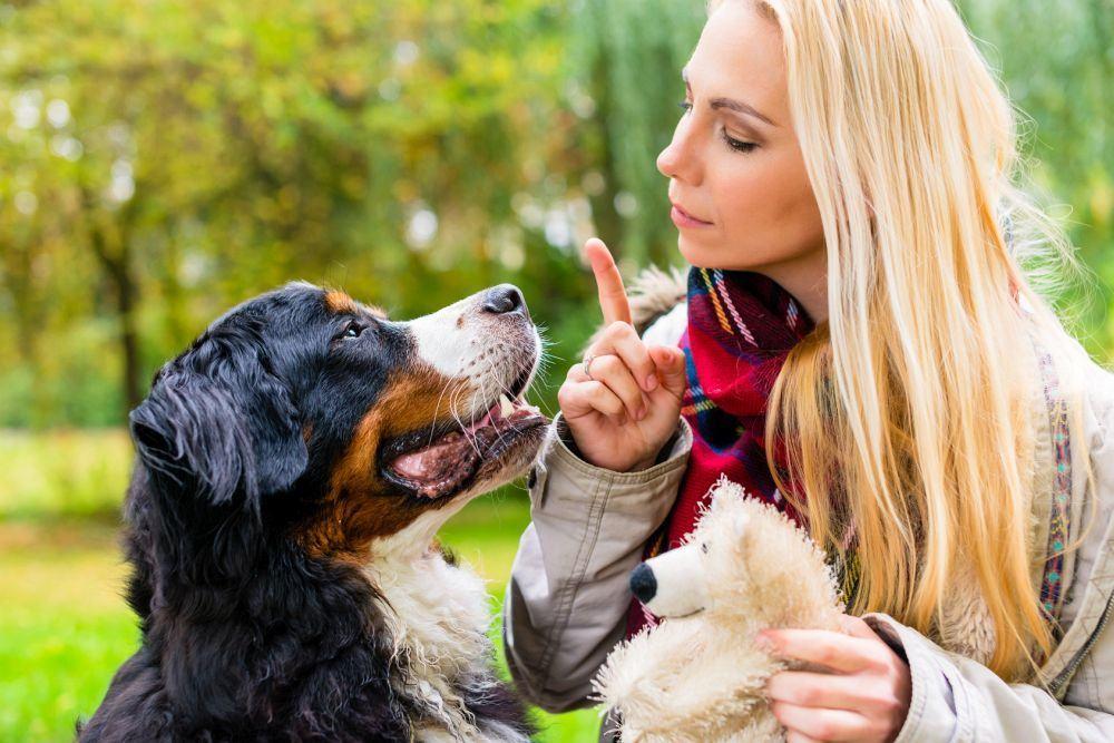 Berner Sennenhund Erziehung und Training