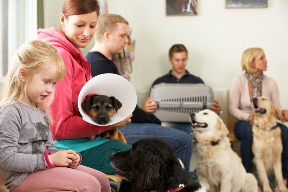 Berner Sennenhund zum Tierarzt?