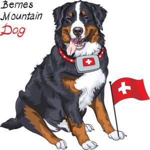 Ursprung Bern: Berner Sennenhund