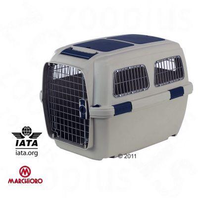 IATA Flugbox für Berner Sennenhund