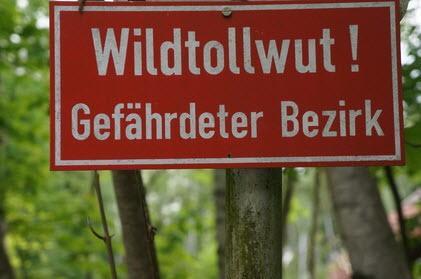 Tollwut beim Berner Sennenhund ist selten. Dank der vielen geimpften Hunden.