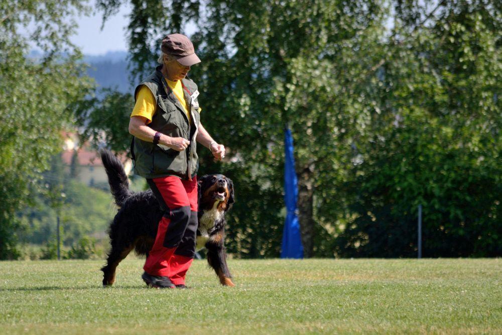 Training Berner Sennenhund Hundeschule