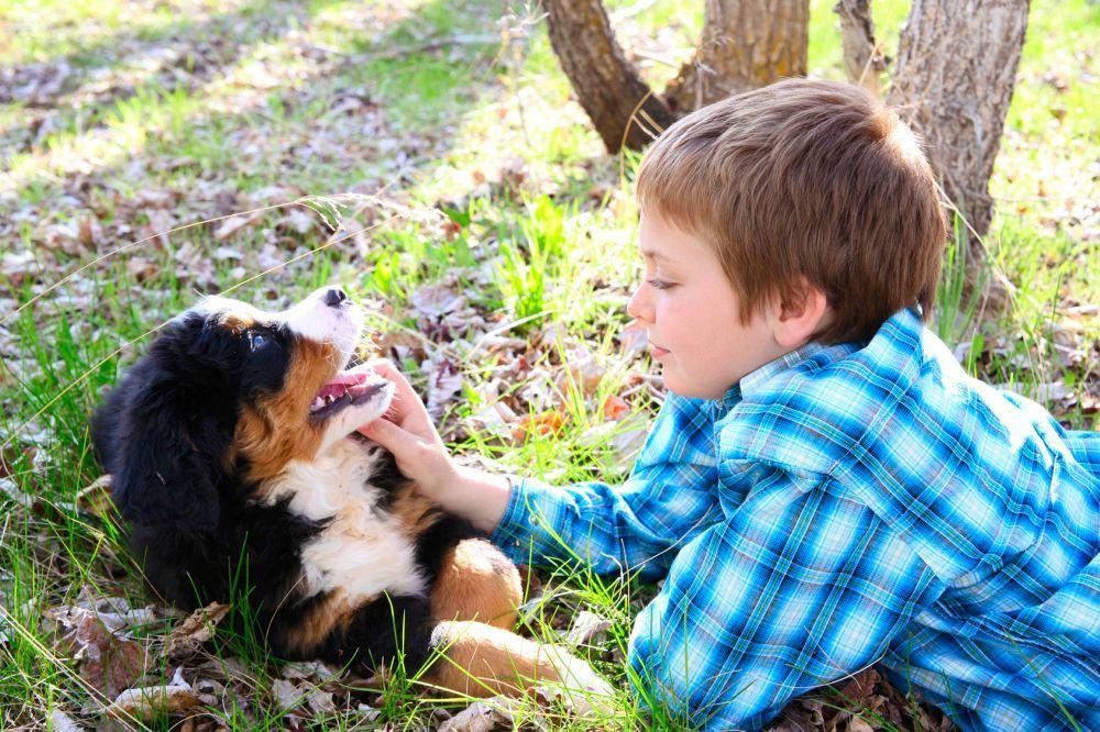 Zeit für Berner Sennenhund Welpen