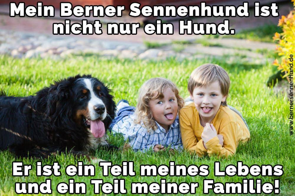 Zwei Kinder und ihr schöne Berner Sennenhund auf dem Rasen liegt