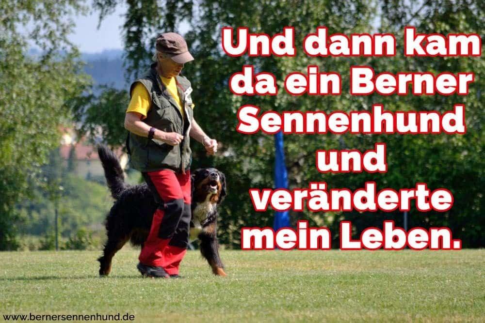 Ein Mann trainiert seine Berner Sennenhund