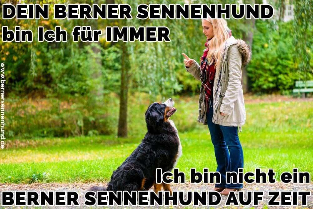 Eine Frau erzieht ihren Berner Sennenhund