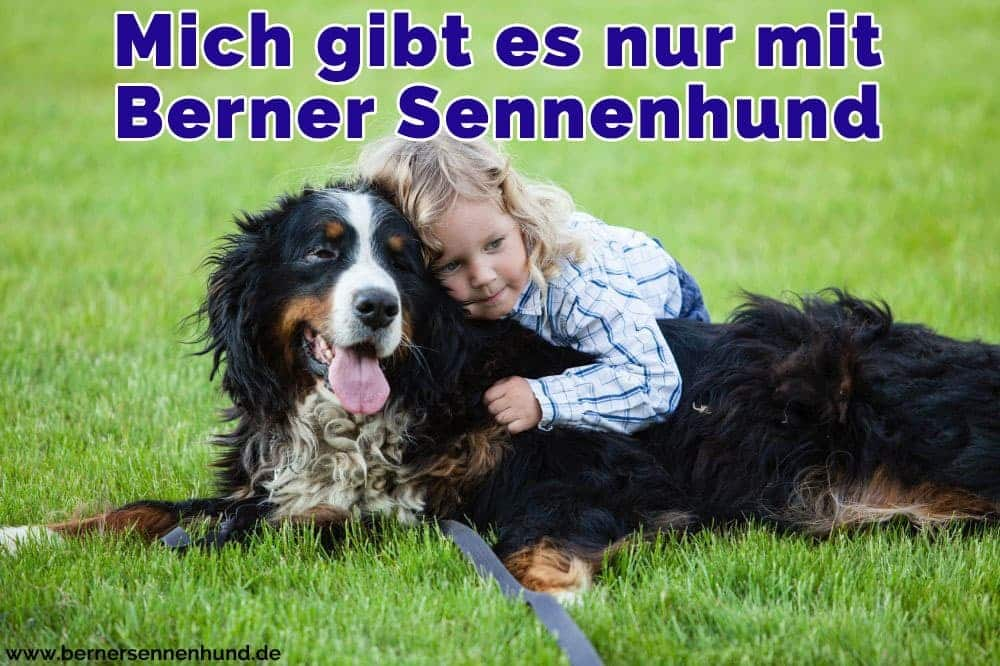 Ein Mädchen umarmt ihre Berner Sennenhund