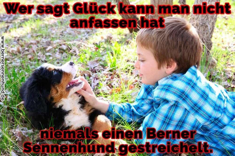 Ein Junge streichelt ihre Berner Sennenhund