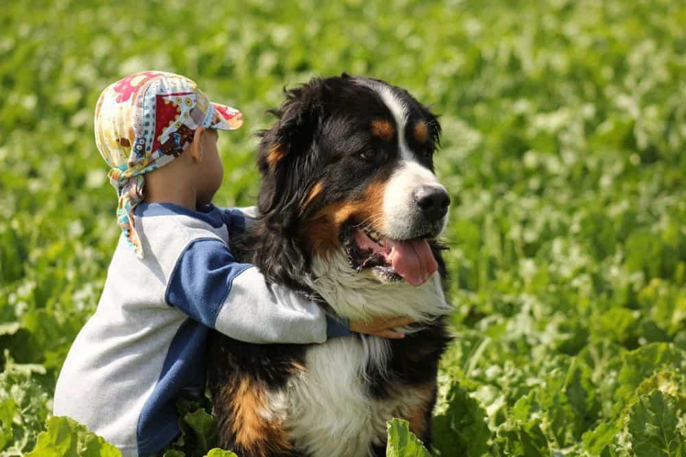 Kleiner Junge mit Berner Sennenhund