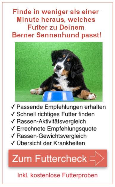Futtercheck Berner Sennenhund