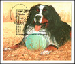 CAMBODIA - CIRCA 1990: postage souvenir sheet, printed in Cambodia, shows a Bernese Dog
